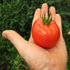 Click here to play Tomato in Hand