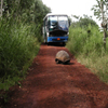 Click here to play Tortoise Road