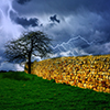Tree In Storm Jigsaw