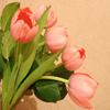 Click here to play Tulips
