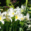 White Flowers Jigsaw