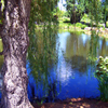 Willow Pond Jigsaw