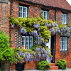Wisteria Covered House Jigsaw