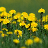 Click here to play Yellow Flowers
