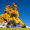 Yellow Tree Jigsaw