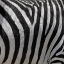 Zebra Stripes Jigsaw